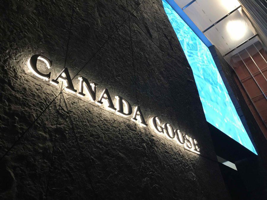 Canada_Goose
